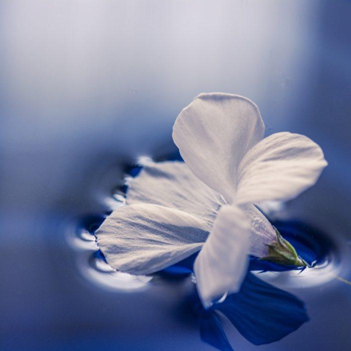 flowers-1167669_1920